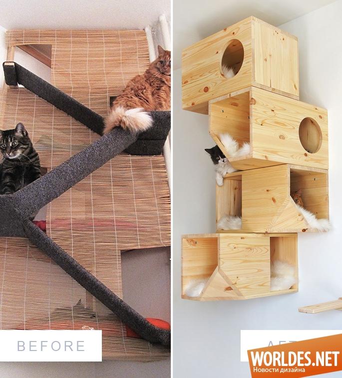 cat climbing on furniture